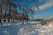 The January Trails In Moscow