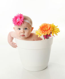 foto of flower pot  - Portrait of an adorable baby girl sitting in a white flower pot along with bright gerbera daisies - JPG