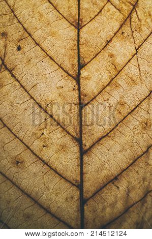 poster of Brown leaf texture and background. Macro view of dry leaf texture. Organic and natural pattern. Abstract texture and background for designers. Dry leaves background. Close up of brown leaf texture.