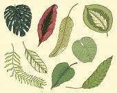 botany poster