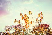 Golden flowers.  Instagram effect poster