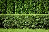 Fundo de Hedge verde