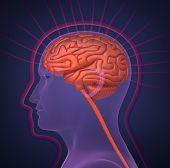 Biofield and human brain