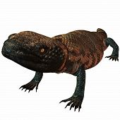 picture of gila monster  - 3 D Computer Render of an Gila Monster - JPG