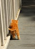 Hugging The Rail