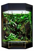 terrarium or vivarium for keeping rainforest animal such as poison frog and lizards. Glass habitat p