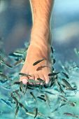 Fish spa pedicure wellness skincare treatment with the fish rufa garra, also called doctor fish, nibble fish and kangal fish.