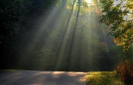 pic of sun rays  - Morning sun light rays piercing through the trees - JPG
