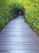 Underpass Of Trees