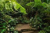 Walking Trail In Tropical Forest. Tropical Forest Landscape. Asian Tropical Rainforest. Lush Green V poster