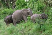 Elefantenfamilie im grünen vegetation