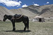 Horse and yurt up Karakorum Highway