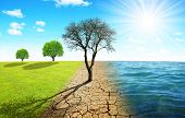 Dead tree in dry country with cracked soil and meadow with sea. Concept of change climate or global  poster