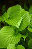Green leaves in nature with dark background