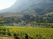 Stellenbosch Vineyards Cape  South africa