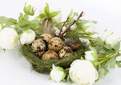 Quail eggs in the nest, flowers on a white background