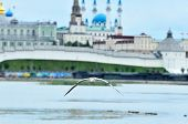 Black-headed Gull, Bird.  A Young Bird Hovers Over The River. Kazan, Russia. poster
