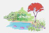 Garden With Maple
