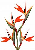 Beautiful Bird Of Paradise Bouquet