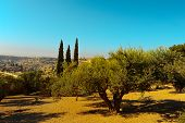 picture of funeral home  - View to Jerusalem from the Olive Grove on the Mount of Olive - JPG