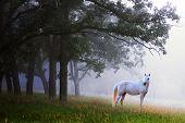 Horse In Mist Woods