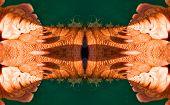 Kaleidoscopic human skin organic organism pattern