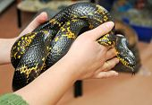 Snake Breeding