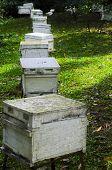 Honey Bee Farm Boxes