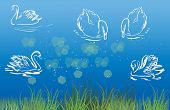 illustration with swans in blue water