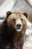 Grizzly Bear sonriendo