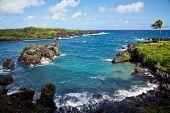 Maui's Vibrant Shoreline