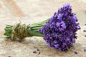 Bouquet Of Fresh Lavenders