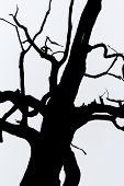 Black And White  Silhouette Of Tree Detail-view