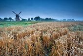 Wheat Field And Windmill, Groningen, Holland