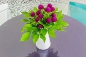 Globe Amaranth In A Vase