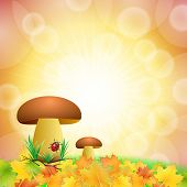 mushroom autumn background