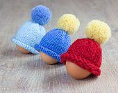 egg warmers
