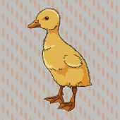 Realistic duckling side view