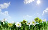 green grass  frame with flower on blue sky background