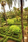 Palms Garden Alcazar Royal Palace Seville Spain