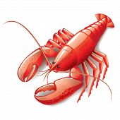 stock photo of lobster  - Cooked lobster isolated on white photo - JPG