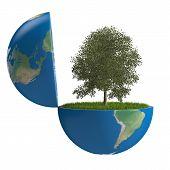 Tree Inside Planet
