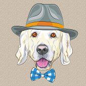 Vector Funny  Dog Golden Retriever