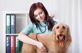 Dog Examined By Female Vet