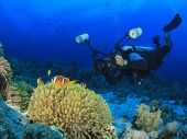 stock photo of biodiversity  - Underwater Photographer scuba diving on reef with clownfish - JPG