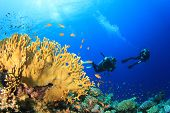 Scuba diving underwater over ocean coral reef