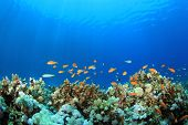 stock photo of biodiversity  - Coral Reef Underwater in Ocean - JPG