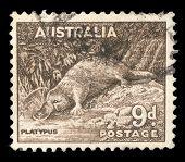 AUSTRALIA - CIRCA 1937: A stamp printed in Australia shows Platypus (Ornithorhynchus anatius), circa 1937