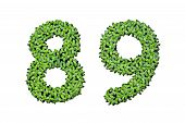 Duckweed Alphabet Letters - Number 8, 9 Isolated On White Background