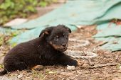 Cute black stray dog puppy